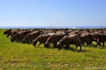 Природа и козы