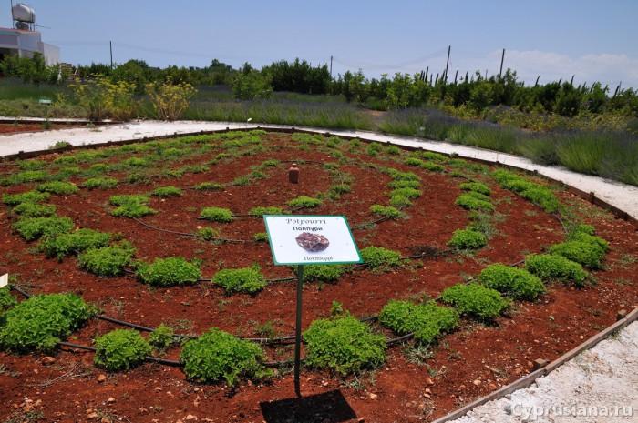 Сад Попурри