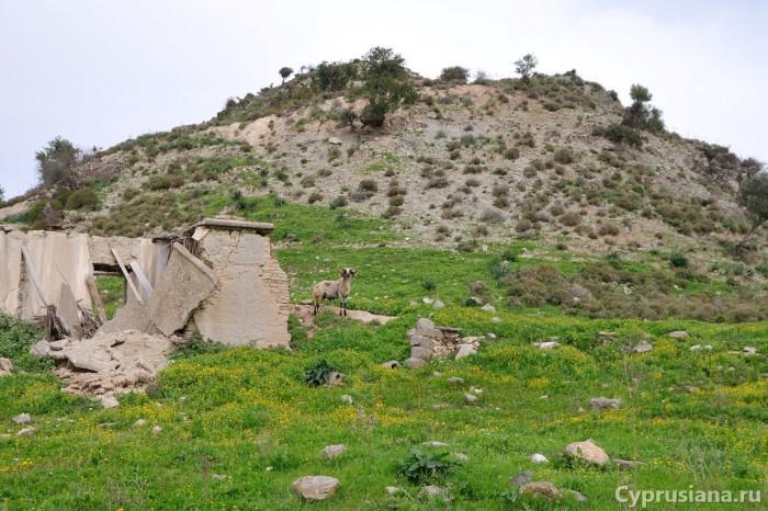 Баран в деревне