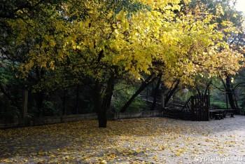 Осень в Какопетрии