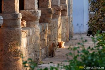 Кошки в монастыре святого Николая
