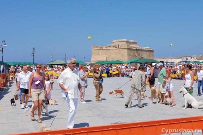 Выставка собак в гавани Пафоса