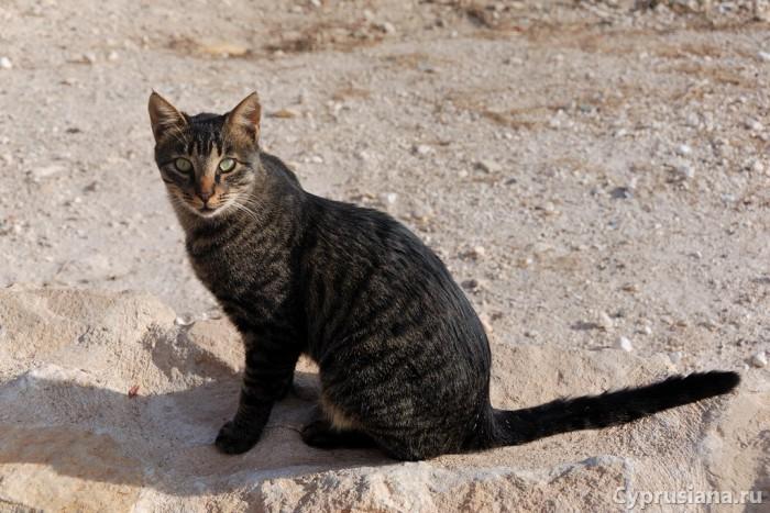 Полосатая кошка в монастыре св. Николая