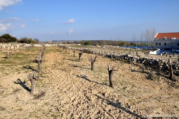Виноградник винодельни Yiaskouris
