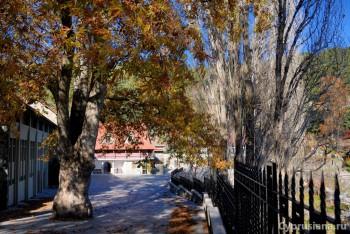 Дерево при входе