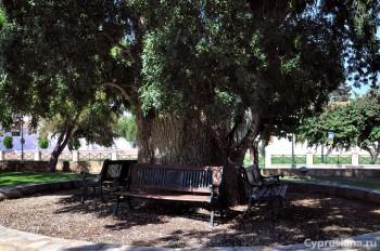 Дерево рядом с церковью