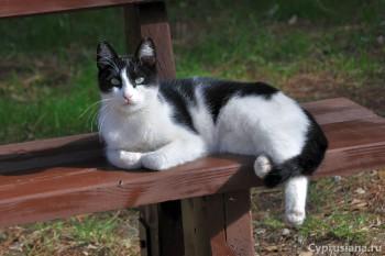Кошки на Дасуди